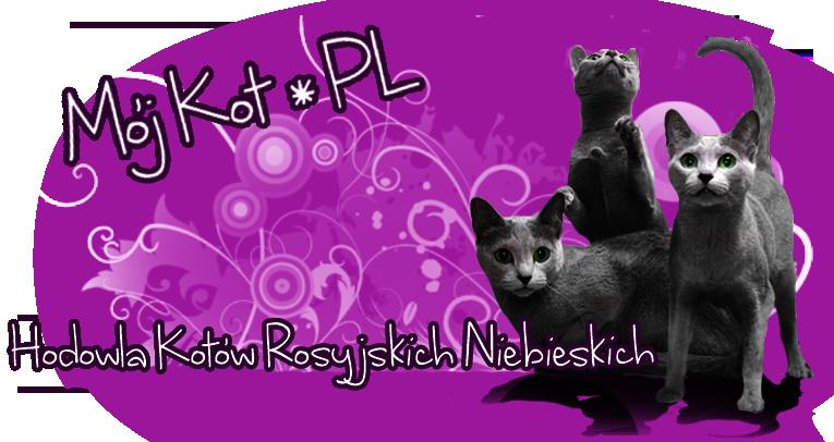 Hodowla kotów rosyjskich Mój Kot*PL